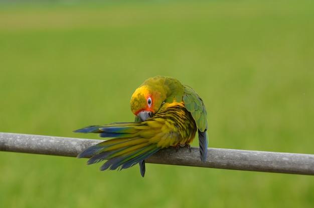 Прекрасный красивый попугай, солнце волшебства. Premium Фотографии