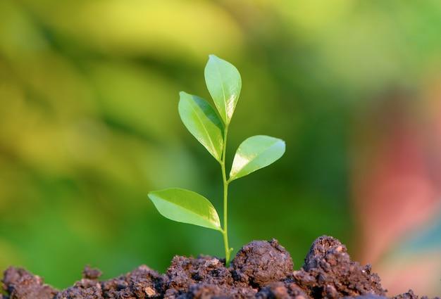 若い緑の葉が生えている、成長している Premium写真
