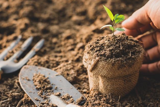 実生は肥沃な土壌から成長しています。 Premium写真