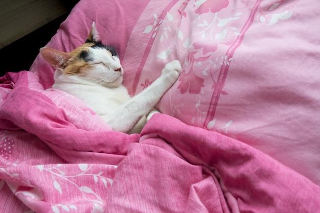 Ситцевая кошка накрыла одеяло и удобно спала на кровати. Premium Фотографии