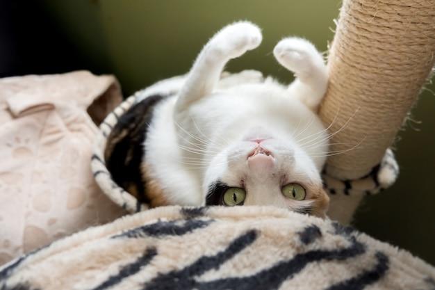 猫は猫の木の穴に横たわっていました。 Premium写真