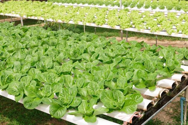 ミネラル栄養素溶液を用いた水生植物栽培法 Premium写真