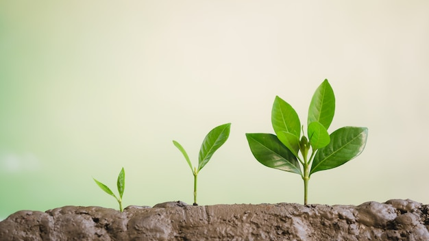 成長するビジネス、若い植物の成長 Premium写真