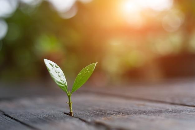 緑の自然の背景のボケ味を持つ朝の光で成長している若い植物 Premium写真