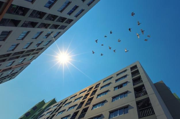 日光を浴びる近代的なマンション Premium写真