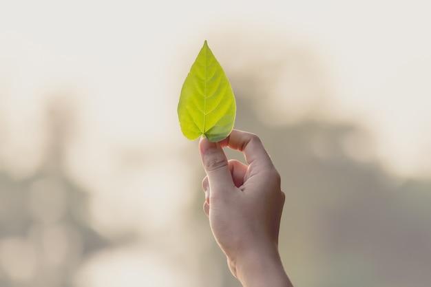 Женская рука держит лист Premium Фотографии