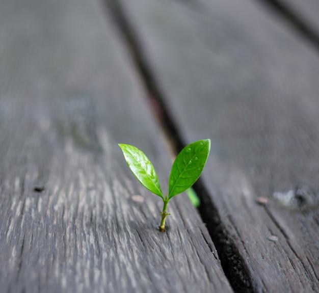 緑の自然と朝の光で成長している若い植物 Premium写真