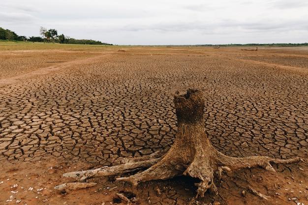 Высушенные пни гибнут на сухой почве в болотах. Premium Фотографии