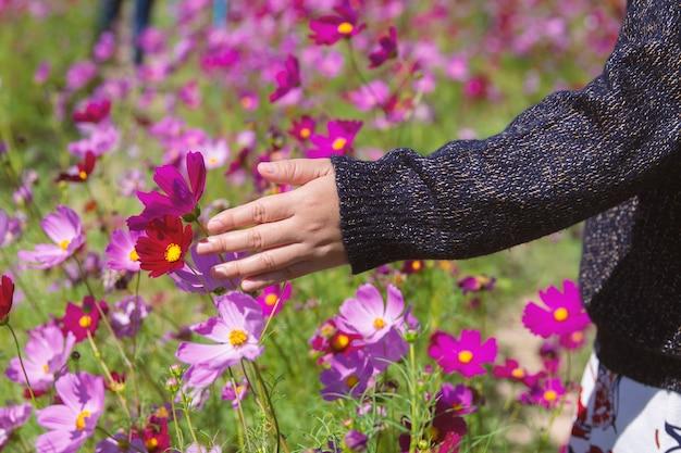 女性の手が庭でコスモスを捕まえた Premium写真