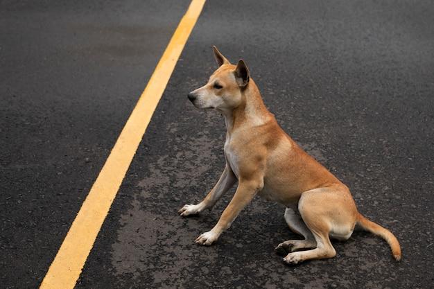 舗装道路に座っている茶色の犬。 Premium写真
