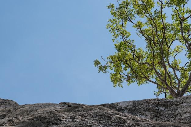 大きな山、崖の上の木 Premium写真