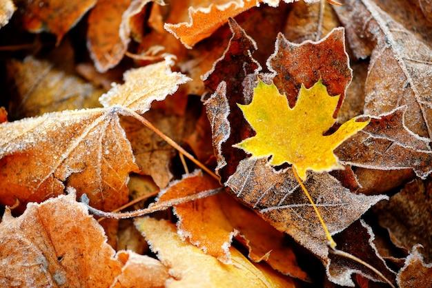 冷凍秋の自然は、カラフルな赤、緑、黄色の葉を閉じます。 Premium写真