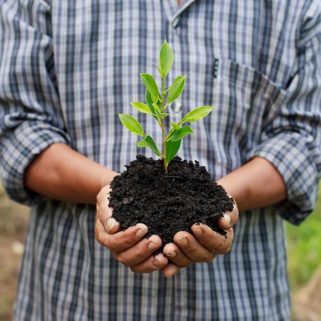 Руки держат зеленый молодое растение. Premium Фотографии