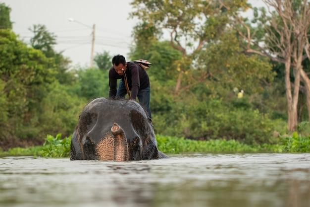 Слоновья езда на слоне в воде Premium Фотографии