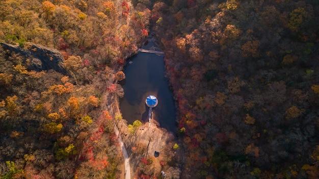 Осень в южной корее Premium Фотографии