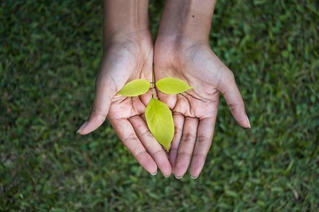 Растущее дерево в руках человека Premium Фотографии
