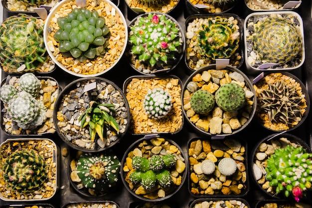 ナイトマーケットで販売しているさまざまな鉢のさまざまなサボテンと多肉植物のコレクション Premium写真