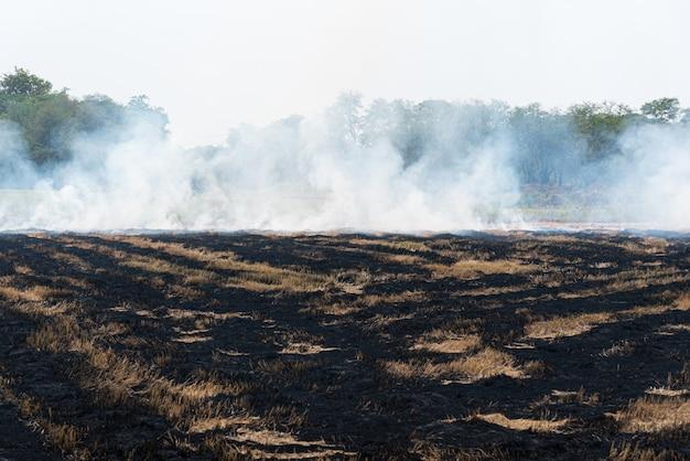 乾いた草を燃やして燃やす Premium写真