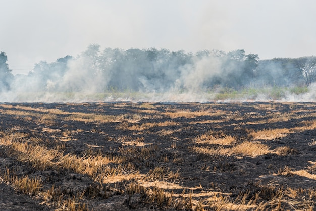 乾いた草に燃える火 Premium写真