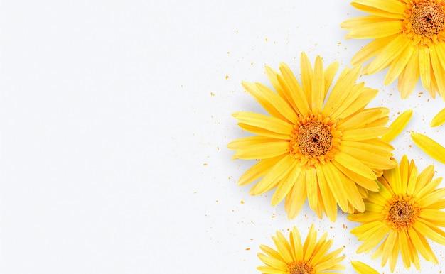 春の季節。白い背景に黄色のガーベラの花 Premium写真