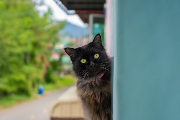 猫は私を見て Premium写真