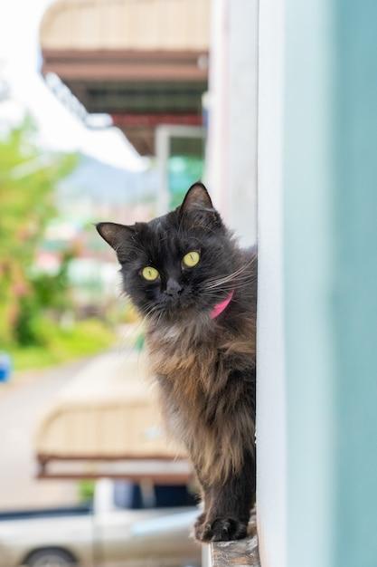 猫は何かを集中します Premium写真