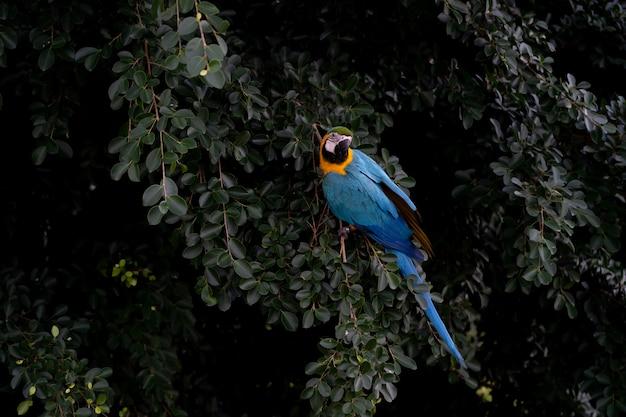 アフリカコンゴウインコの木 Premium写真