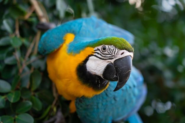 Африканская ара на дереве Premium Фотографии