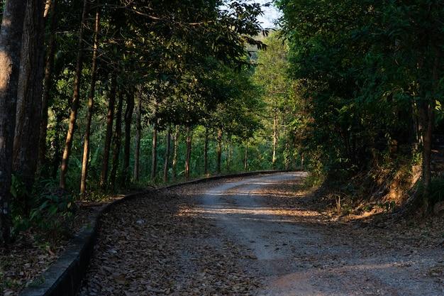 Сельская дорога Premium Фотографии