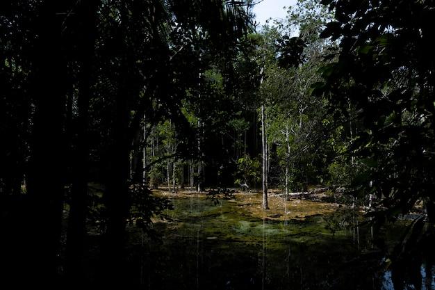 山の森の深い川。自然の組成 Premium写真