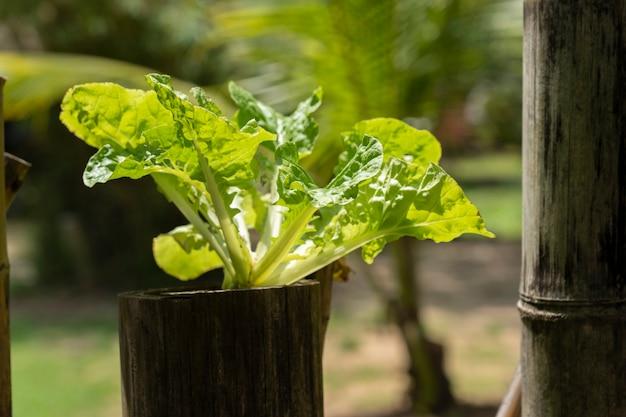 水耕プランテーションは自然から生まれる Premium写真
