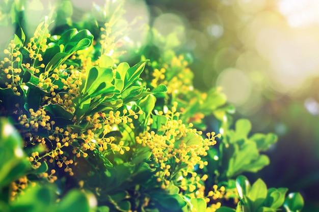葉と照明のきらめきの背景 Premium写真