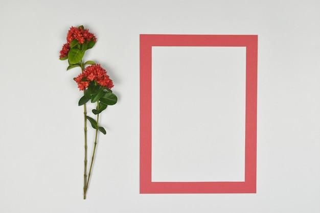 側に赤いスパイクの花を持つ空の空白のフォトペーパーフレーム。 Premium写真