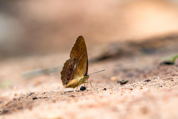 石の上に腰掛けて翼に白いドットと茶色の蝶の側面図 Premium写真