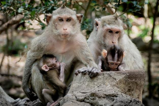 母親の保護の下で赤ちゃん猿。シャギーなオレンジ色の毛皮と人間のような表現を持つサル家族 Premium写真