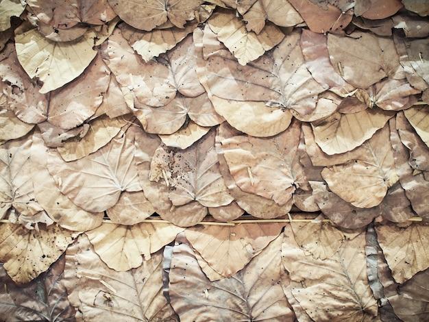 乾燥葉(チークの葉)壁の背景とテクスチャ。 Premium写真