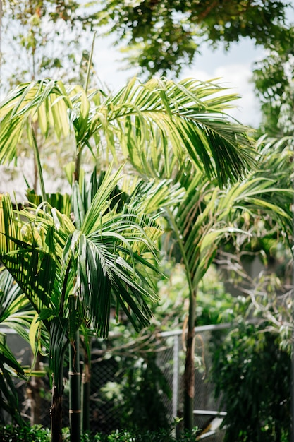 多くのキンマの木の裏庭 Premium写真