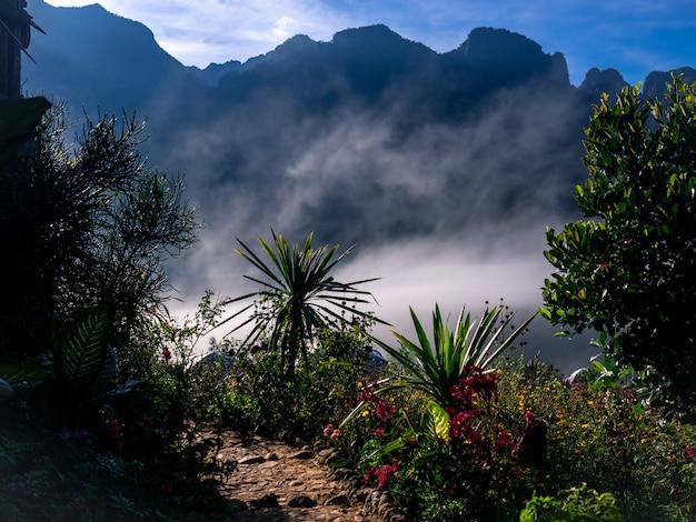 美しい自然の風景の背景 Premium写真