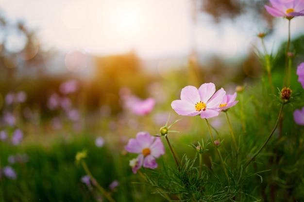 自然の場所で新鮮なカラフルな花 Premium写真