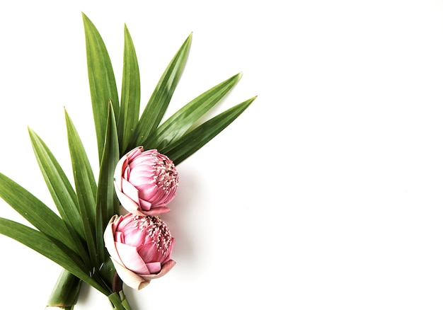 ピンクの花蓮の花束 Premium写真