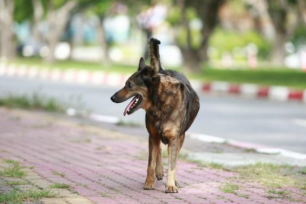通りを歩いている犬 Premium写真