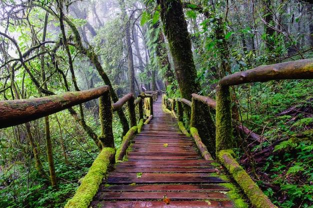 山の常緑の森の国民公園で歩道を歩く橋 Premium写真