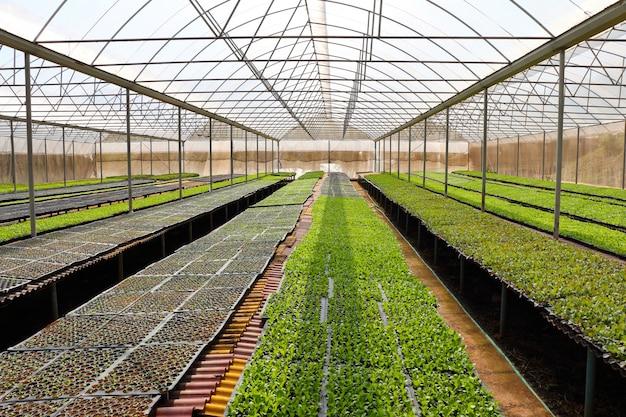 Органические овощи в теплицах Premium Фотографии