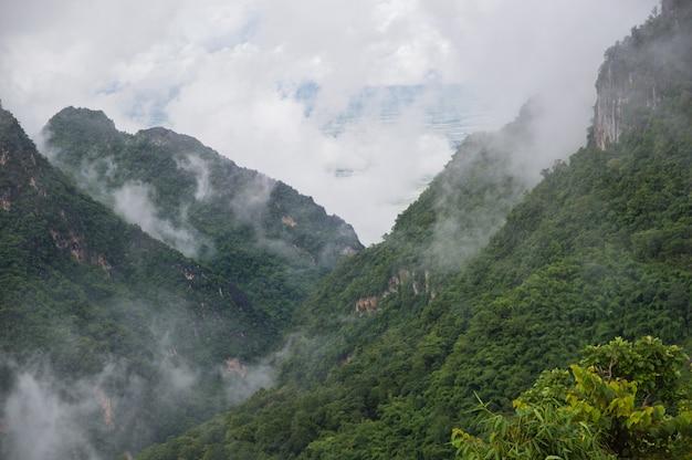 雨の後、霧が緑の山々を覆った。 Premium写真