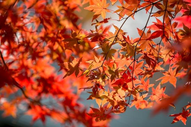 かわぐちこ日本の紅葉。 Premium写真