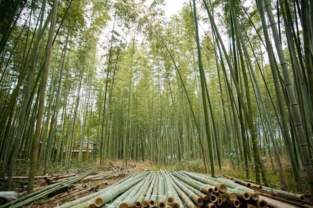 日本の竹林、嵐山、京都 Premium写真