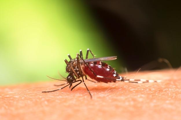 スーパーマクロ蚊吸血 Premium写真