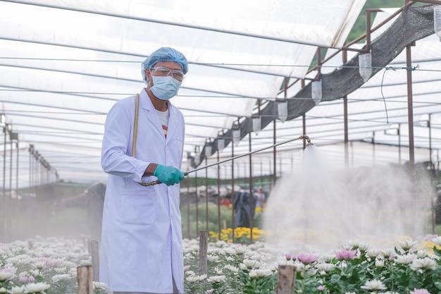 男性研究者が肥料をキクの実験区画に注入 Premium写真