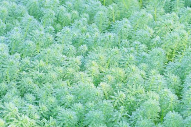 朝の水草の露 Premium写真