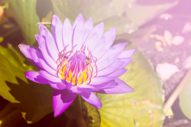 葉の美しい蓮の花のクローズアップ Premium写真